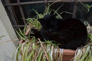 Katzen und Hunde - alle sehr entspannt