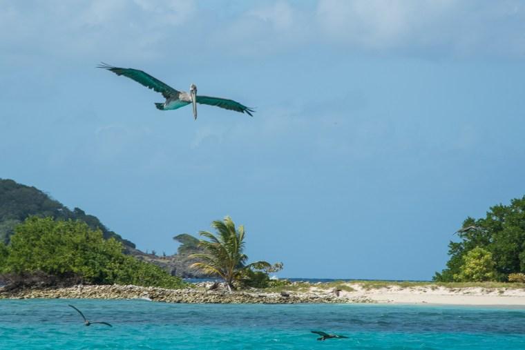 Foto Januar 7 Sandy Island-1352