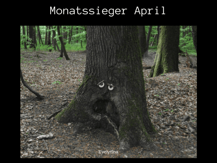 Monatssieger April