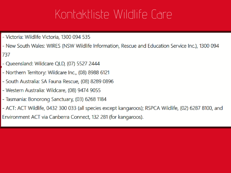 Kontaktliste Wildlife Care.png
