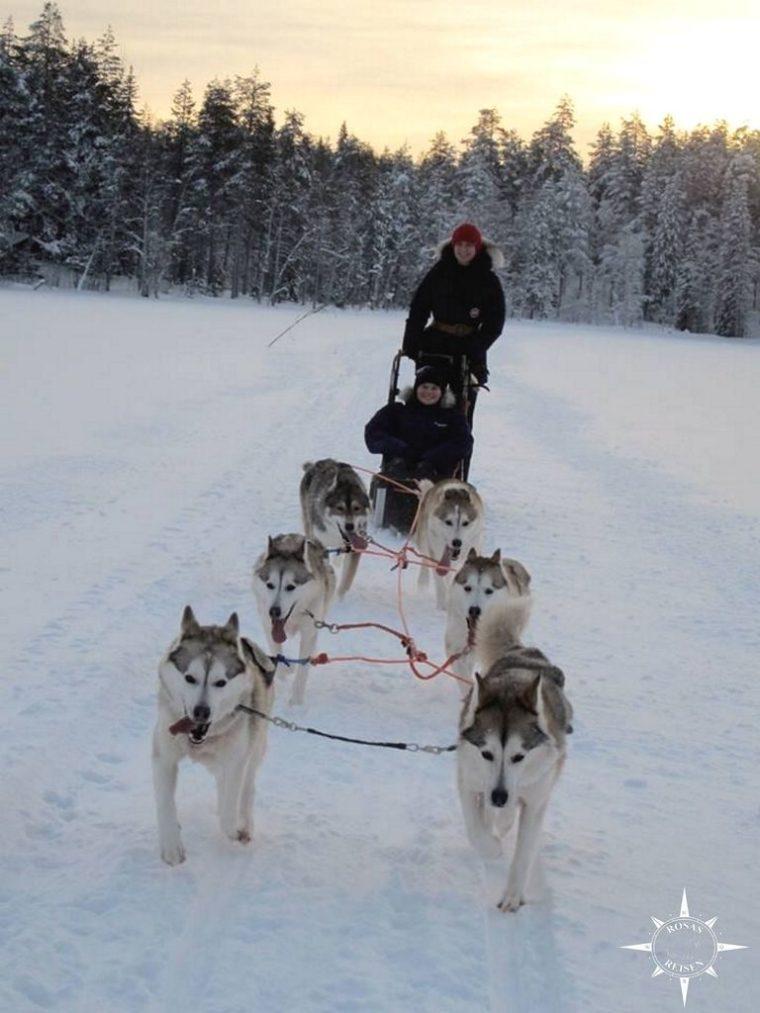schlittenhunde-finnland-arktis3-768x1024