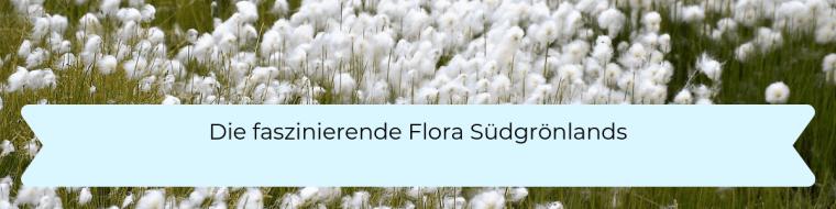 Die faszinierende Flora Südgrönlands