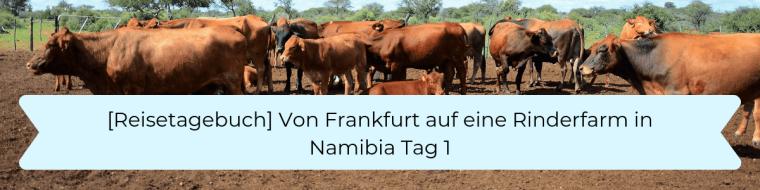 Reisetagebuch 1 Anreise zur Rinderfarm