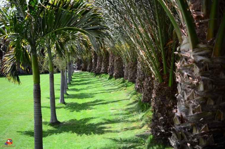 Botanischer Garten Santa Maria