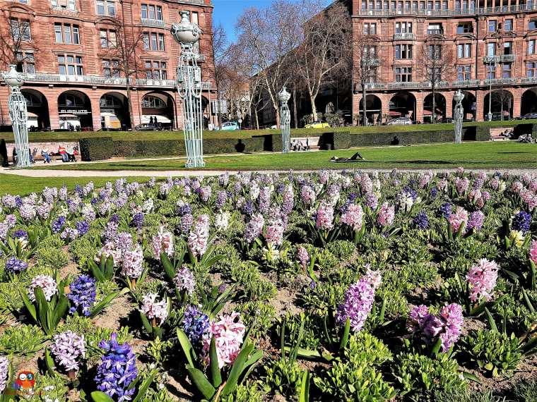 Mannheim im Frühling