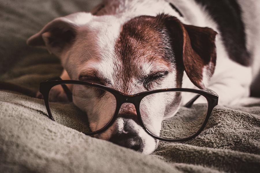 Waarom een seniorencheck handig is voor een oude kat of hond