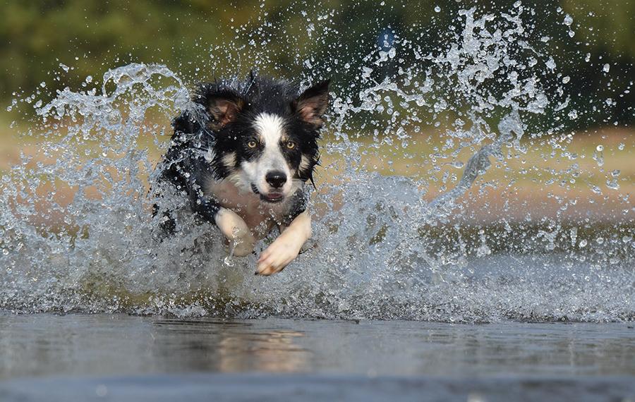 Jaarlijks de hond vaccineren tegen leptospirose