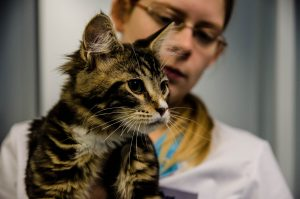Kattengeneeskunde - Dierenkliniek Winkelhof en Dierenkliniek Rijnwoude