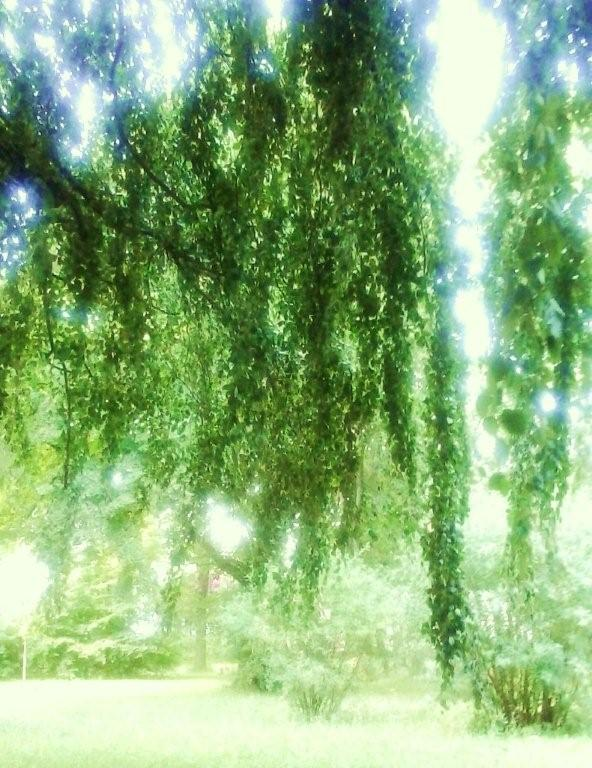 Dreamy trees-1