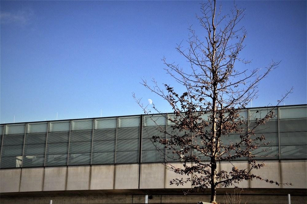 frostelnderbaum