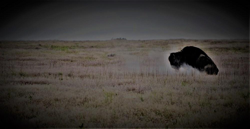 BuffaloDust1