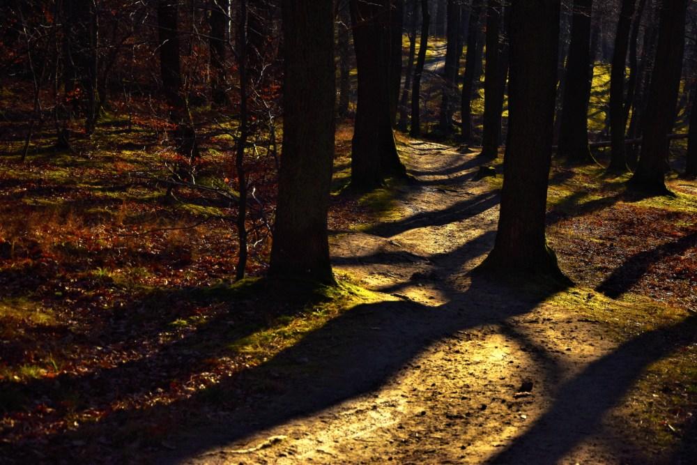 Delightful path © Silvia Springer