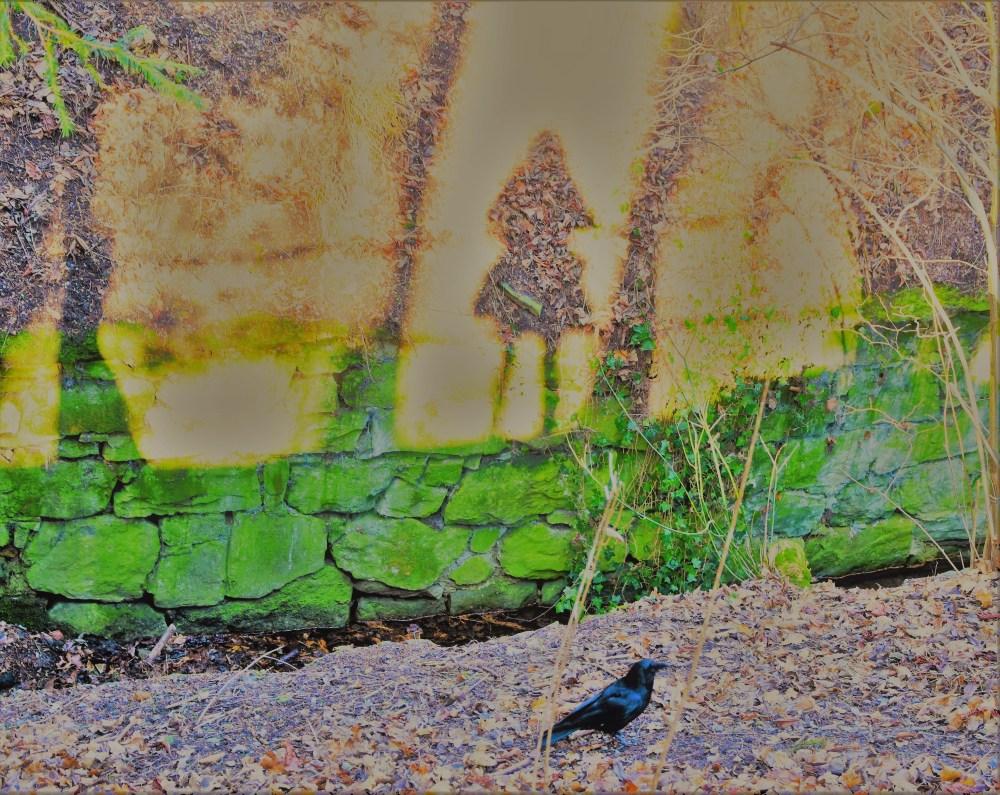 Schatten und Krähe © Silvia Springer