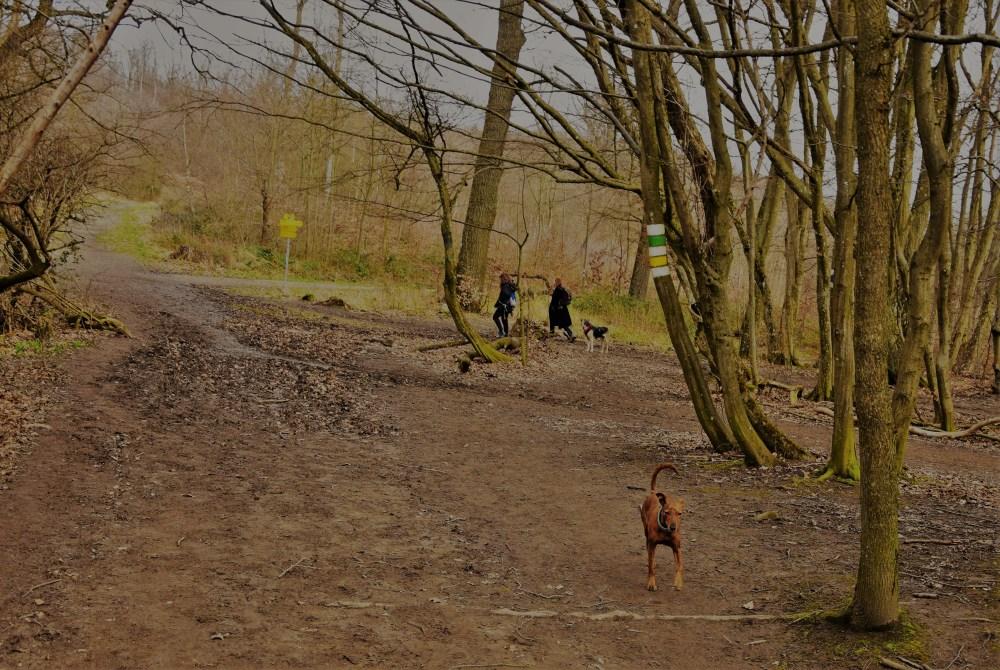Kreuzweg mit Hund © Silvia Springer