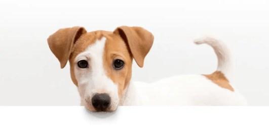 Como fazer biscoito para cachorro