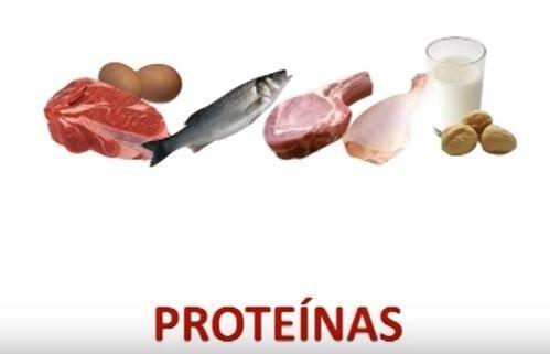 alimentos animal