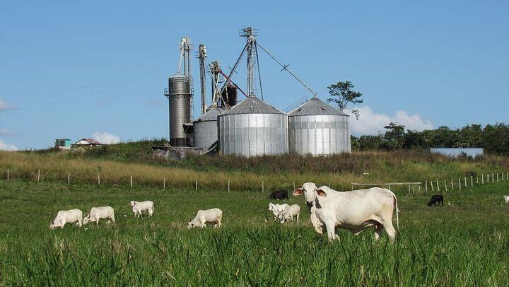 ganado industrial