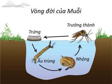 vong-doi-cua-muoi