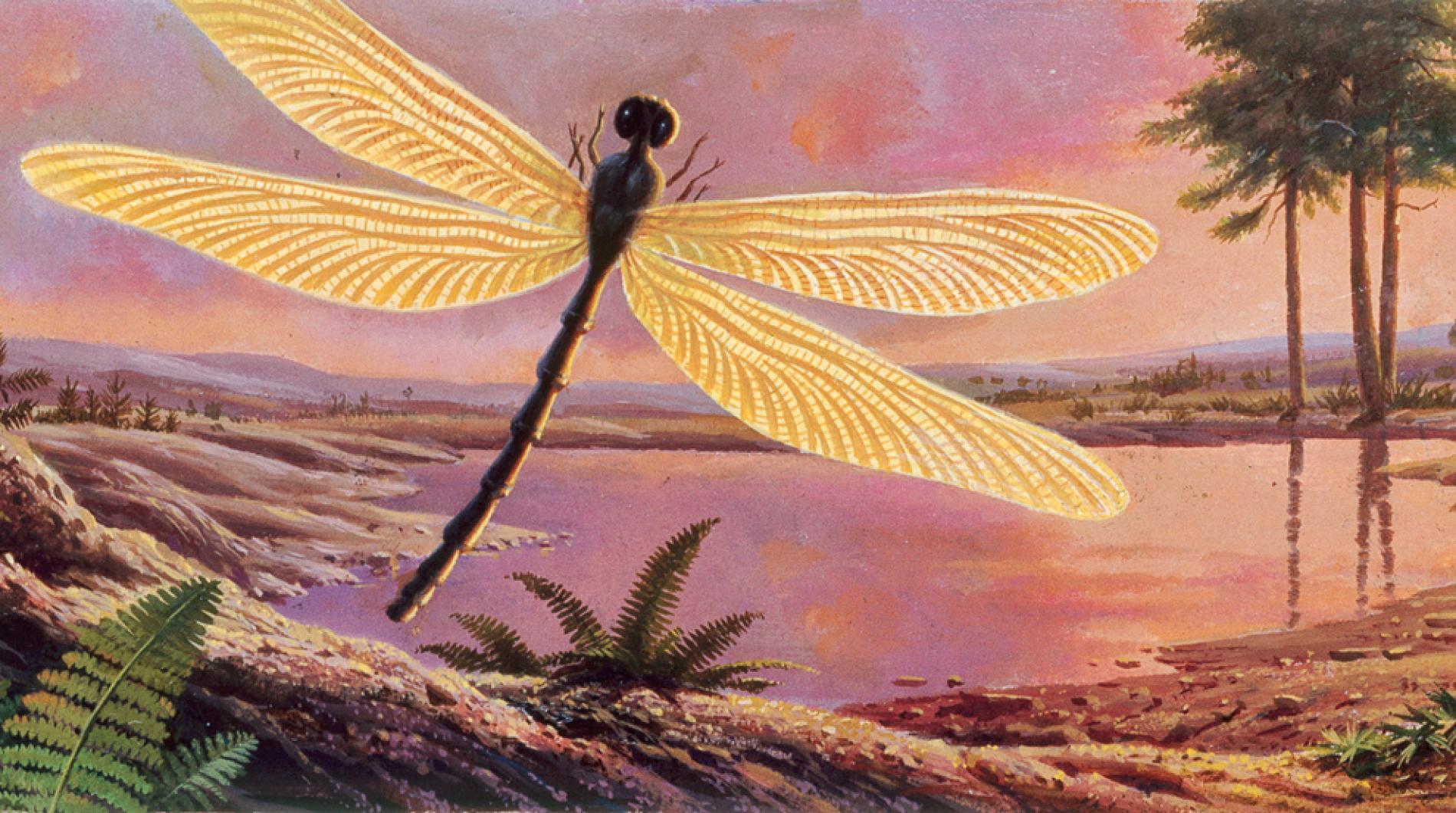 Tất cả những gì bạn muốn biết về côn trùng khổng lồ thời tiền sử