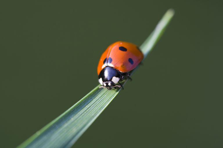 Côn trùng: loài động vật đa dạng nhất hành tinh