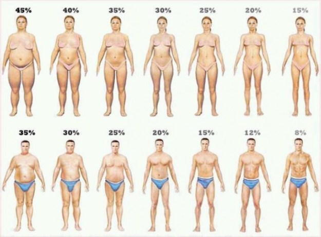 Body Composition: Men vs. Women.