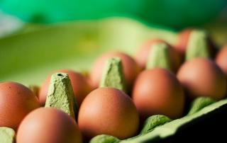 Food Eggs Box