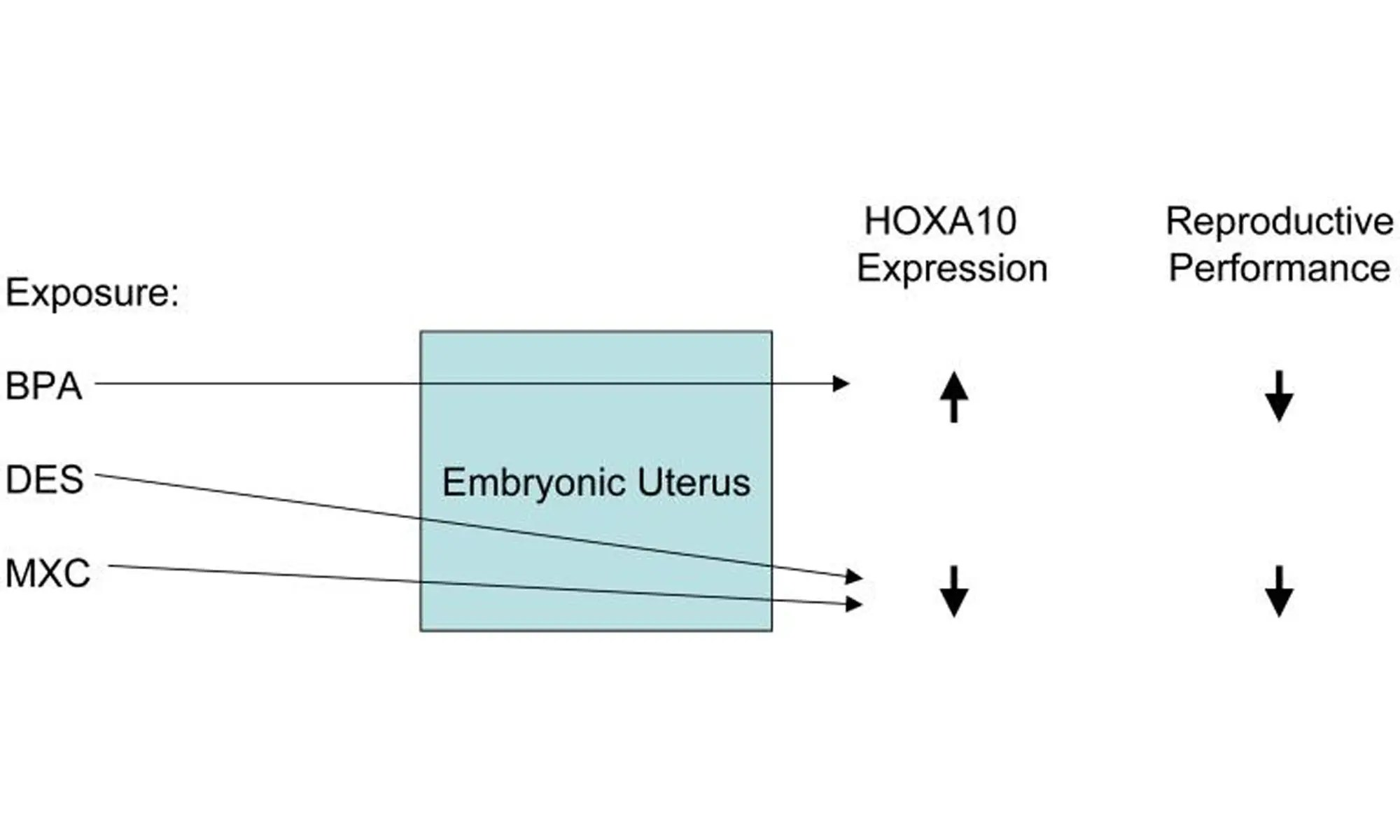 image of alters HOXA10 gene expression in the developing reproductive tract