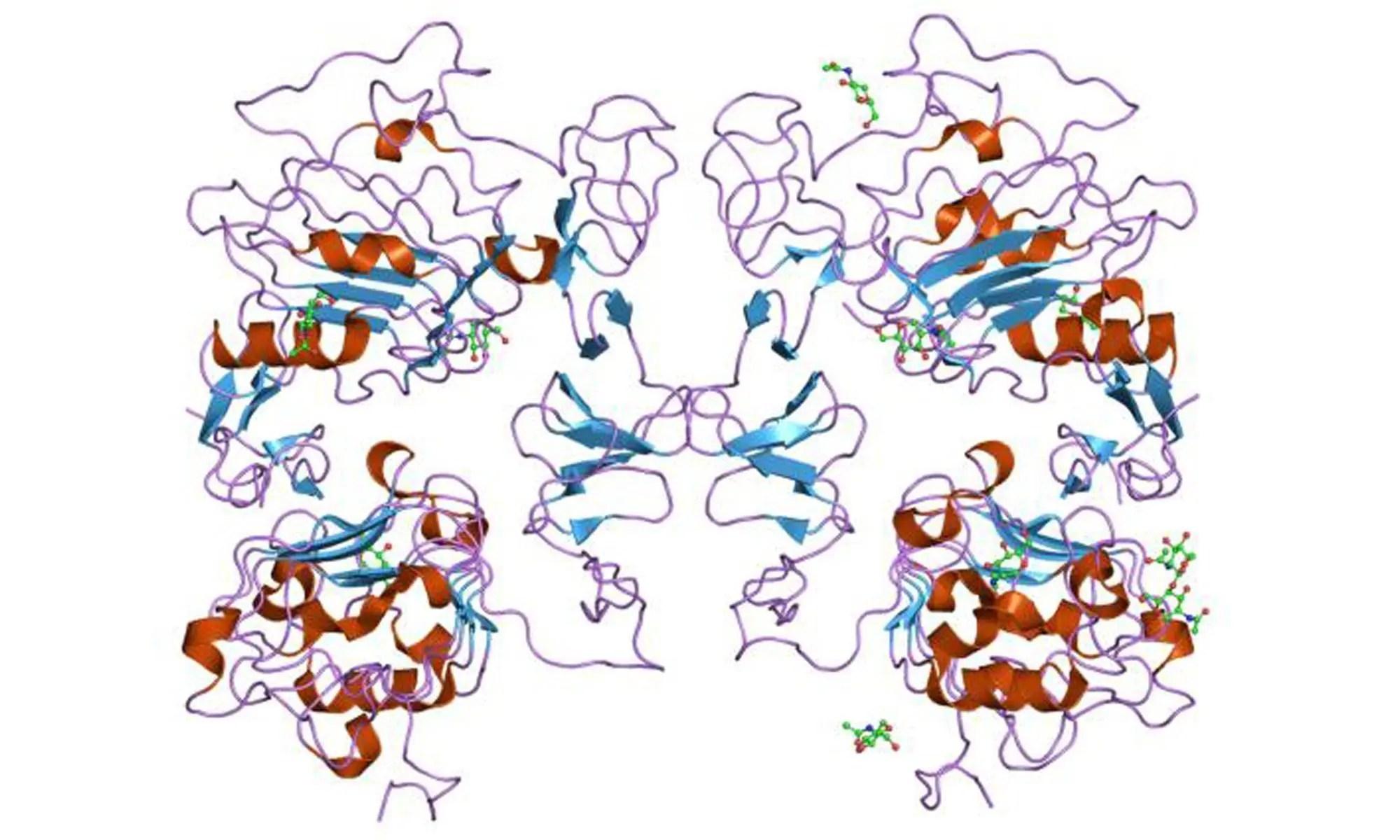 image of epidermal growth factor EGF