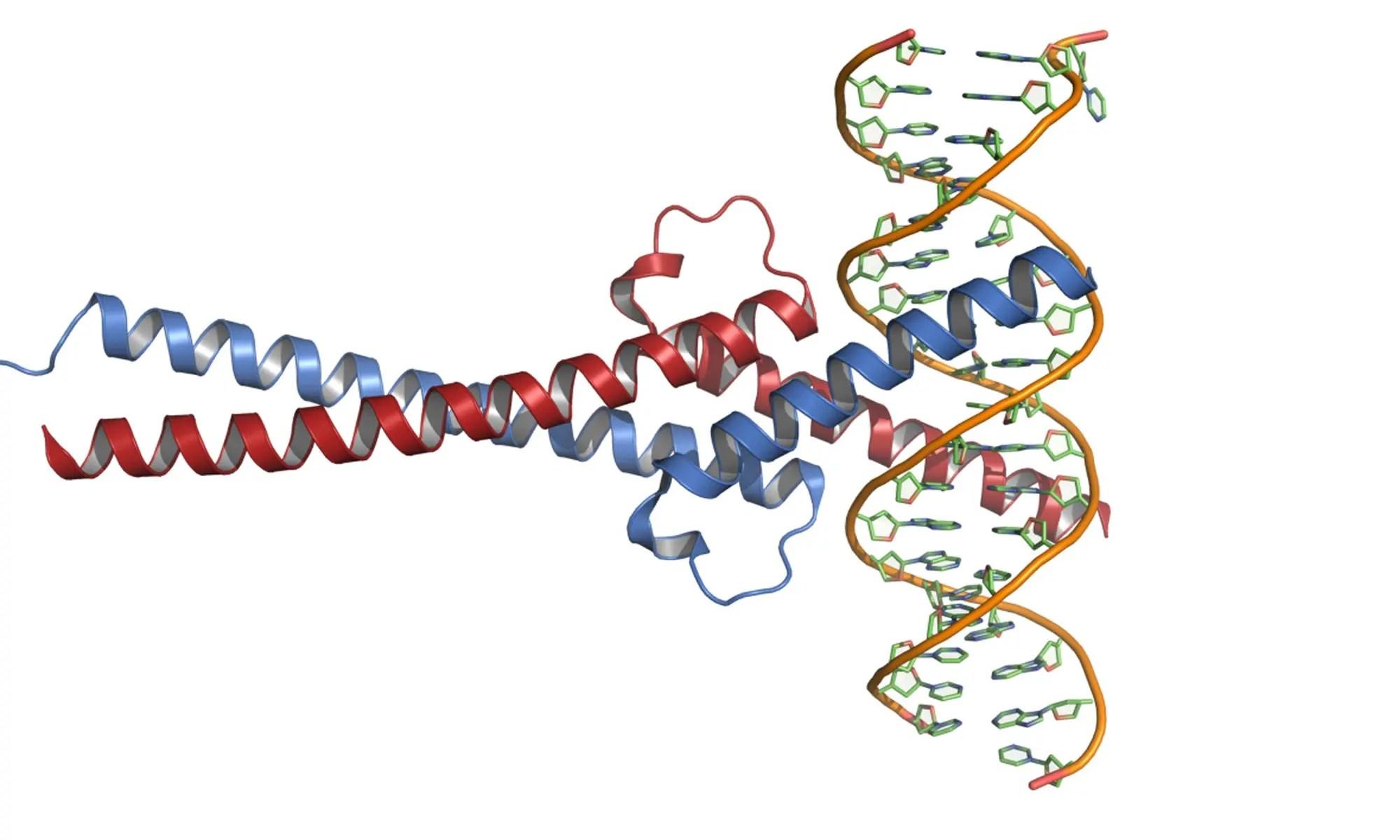 image of C-Myc-DNA_complex