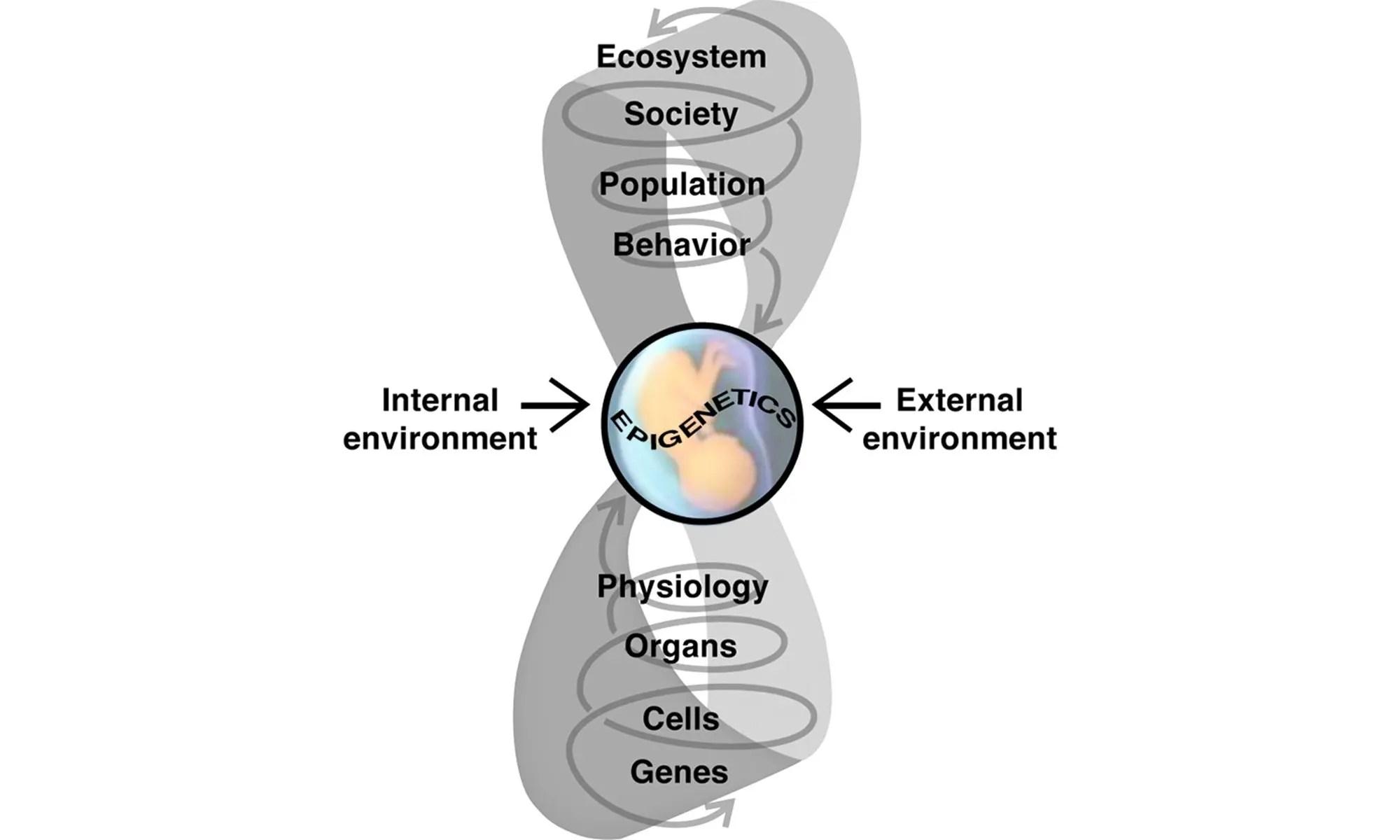 image of Epigenetics, Evolution, Endocrine Disruption, Health, and Disease