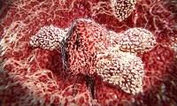 DES immunotoxicity