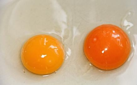 12 curiosidades del huevo