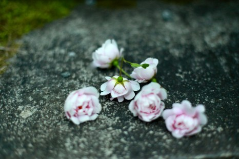 rosor på sten