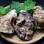 牡蠣1個のカロリーや栄養とダイエット効果!レシピは?