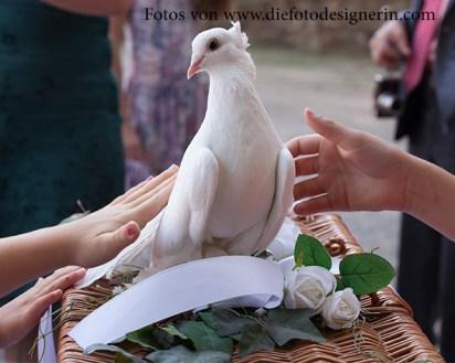 Die Hochzeitstauben einmal streicheln...