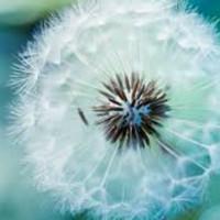 Лекарственные растения для красоты и здоровья кожи