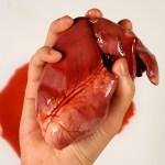 Organtransplantation: Eine medizinisch-theologische Betrachtung