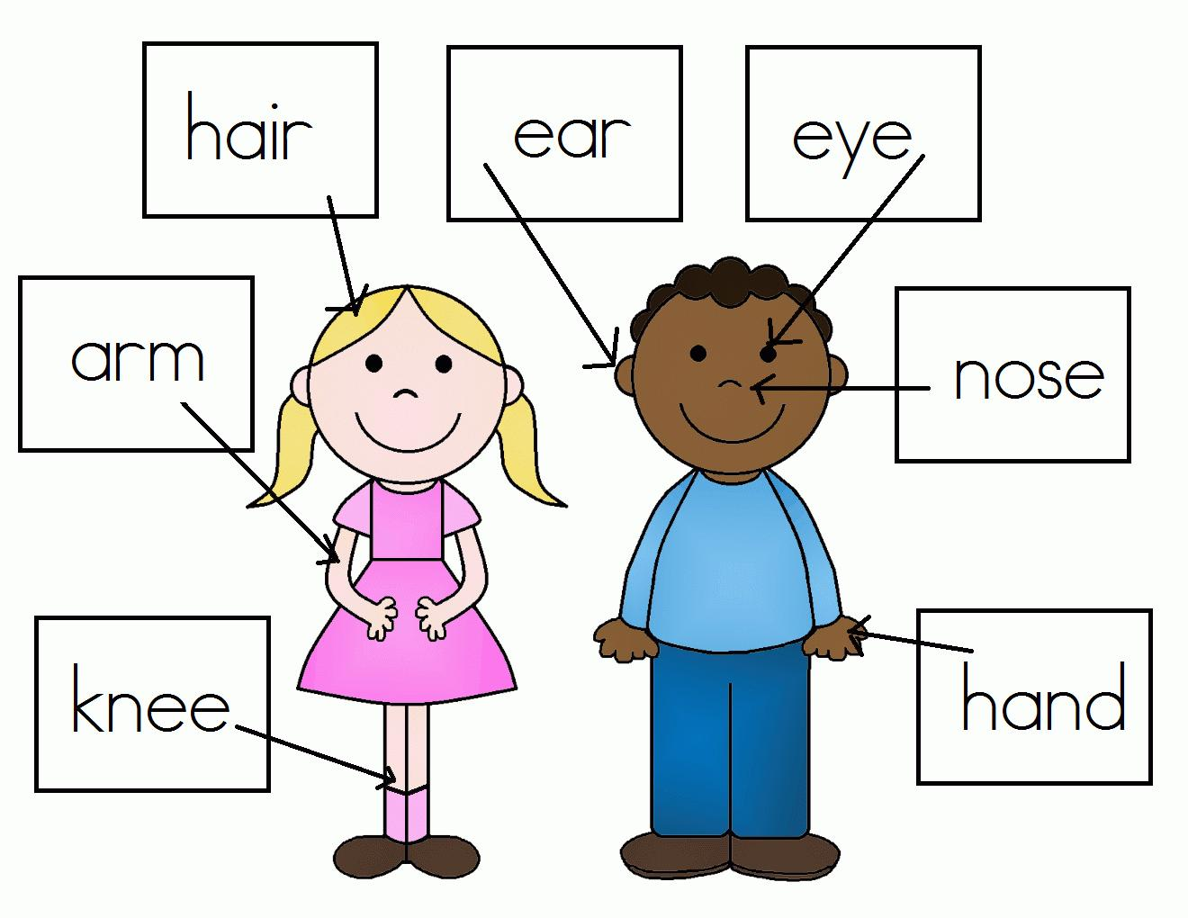 Preschool Worksheets Body Parts 3