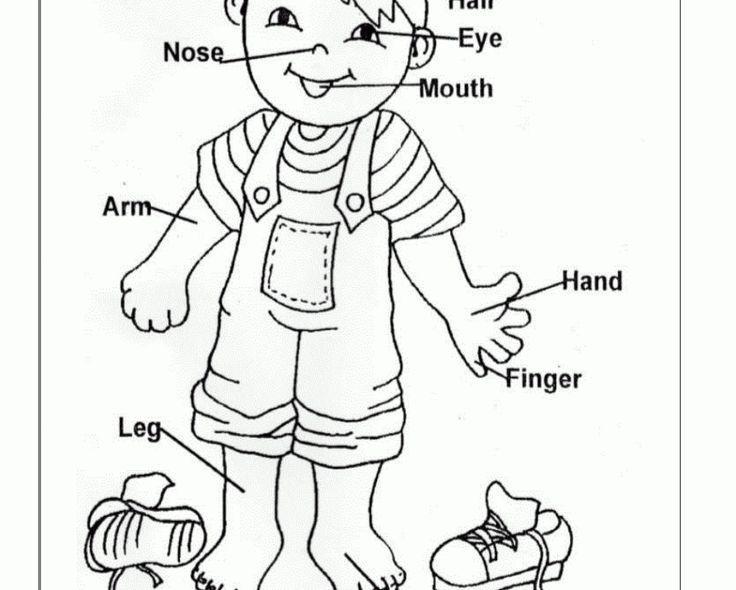 Preschool Worksheets My Body 3