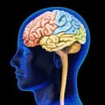 brain 13