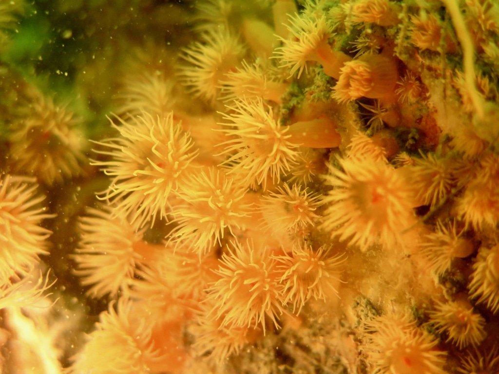 Une vie sous marine riche à découvrir en allant plonger en Zélande