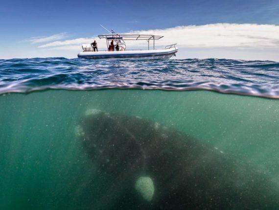 Une baleine sous un bateau