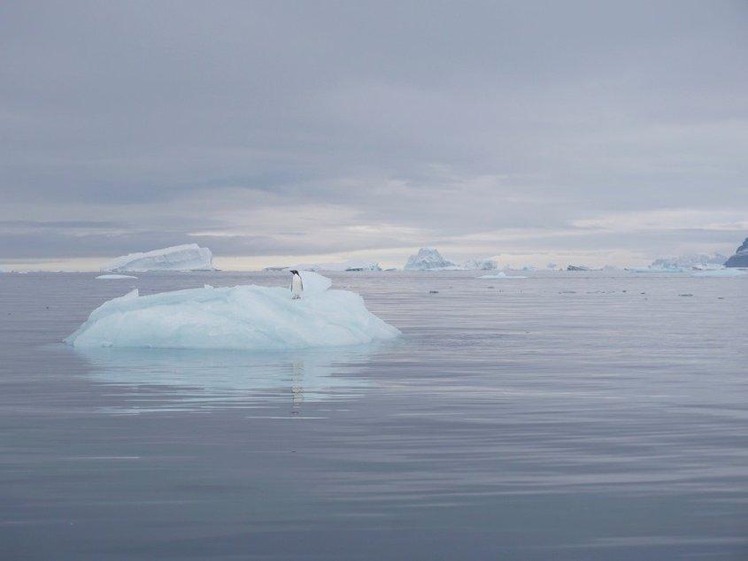 Un morceau de banquise qui flotte sur l'océan en Antarctique