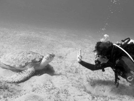 Une plongeuse fait le signe ok à une tortue