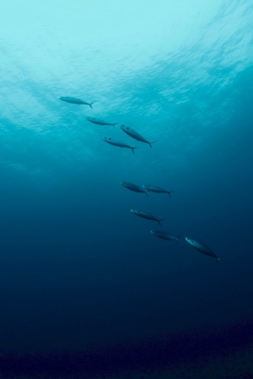 Les bancs de poissons passent paisiblement