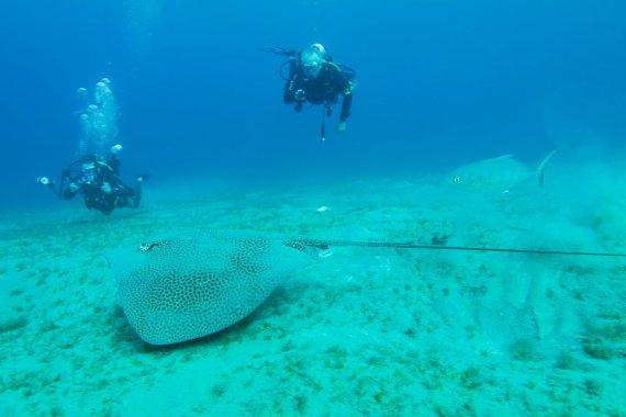 Deux plongeurs regardent passer une raie