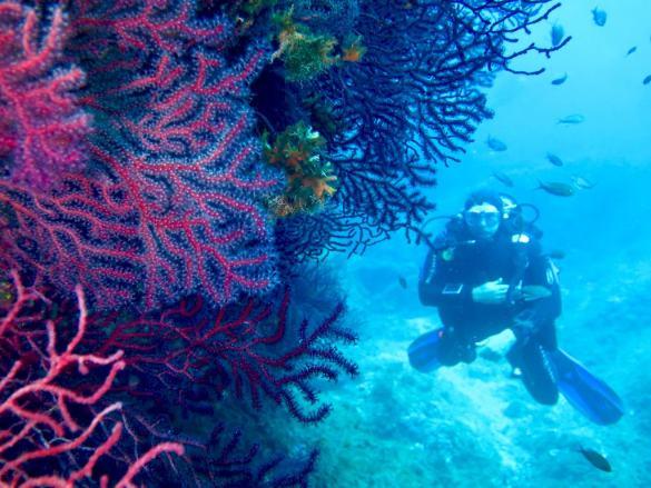 Un plongeur en exploration au sud de la France