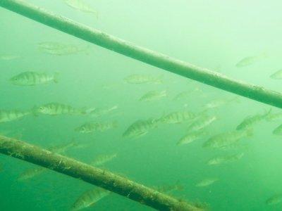 Un banc de perches près de la mise à l'eau de la carrière de Dongelberg