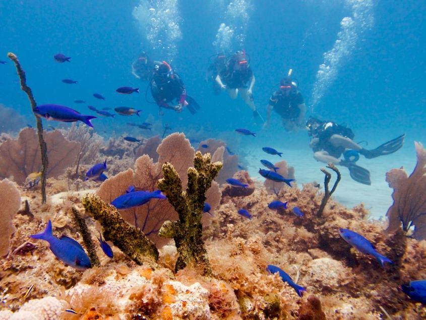 Des plongeurs sont réunis en palanquée dans les eaux Jamaïcaines
