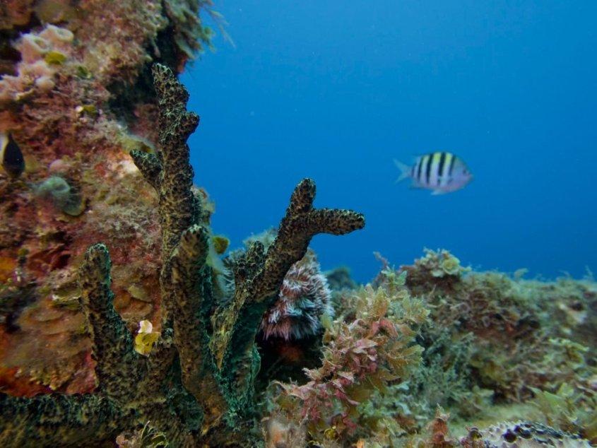 Paysage sous marin que vous verrez si vous allez plonger en Jamaïque